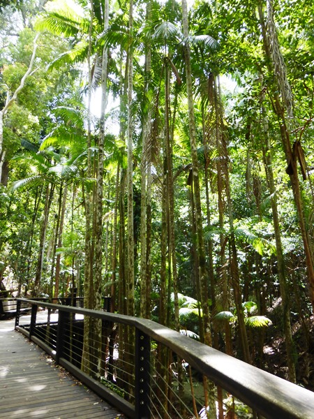 Bushwalk an der Central Station auf Fraser Island